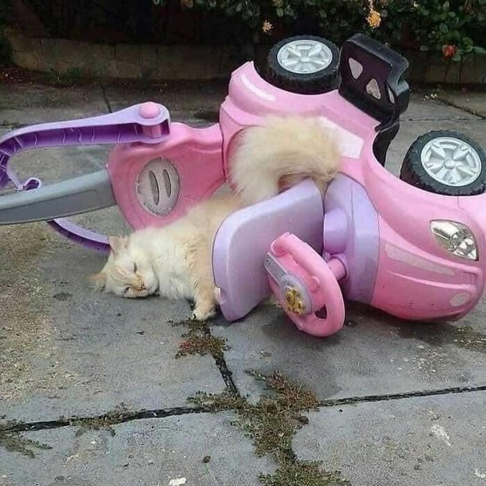 Conta do Instagram com fotos de animais fofos e engraçados (51 fotos) 39
