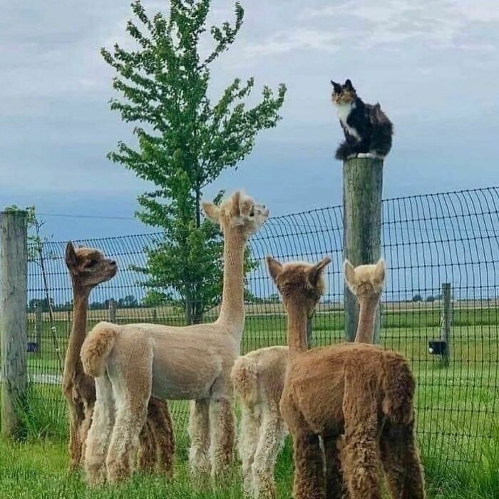Conta do Instagram com fotos de animais fofos e engraçados (51 fotos) 45