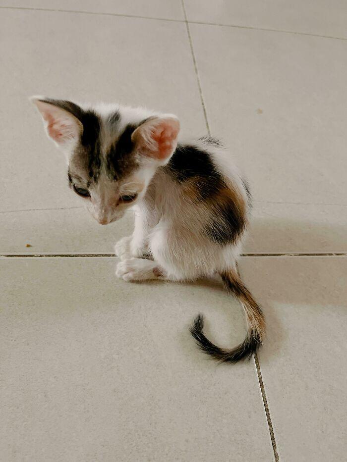 32 fotos de animais de estimação de resgate mais saudáveis do mês de agosto 2