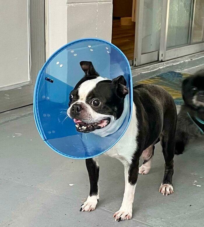 32 fotos de animais de estimação de resgate mais saudáveis do mês de agosto 23