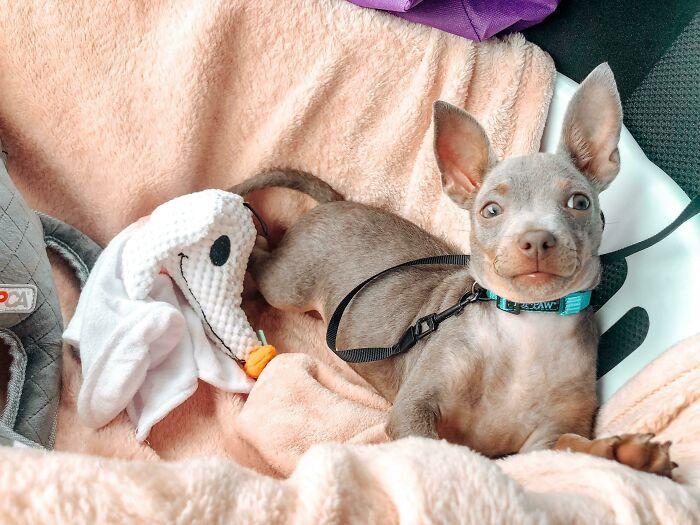 32 fotos de animais de estimação de resgate mais saudáveis do mês de agosto 24