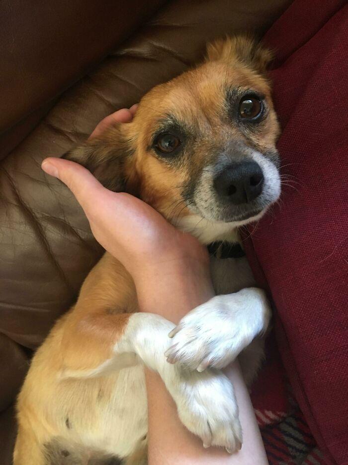 32 fotos de animais de estimação de resgate mais saudáveis do mês de agosto 25