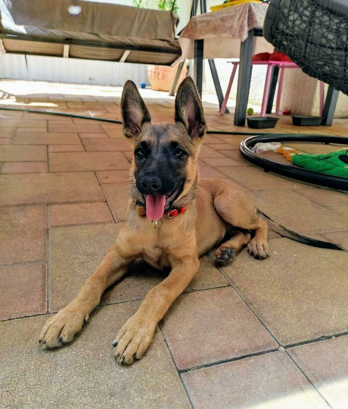 32 fotos de animais de estimação de resgate mais saudáveis do mês de agosto 29