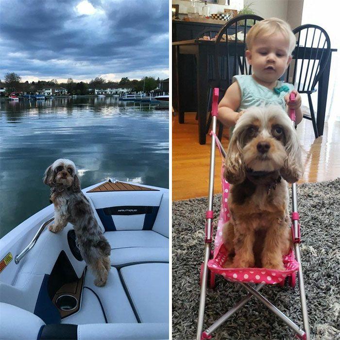 46 fotos hilárias de antes e depois de como a vida muda depois de ter filhos 2