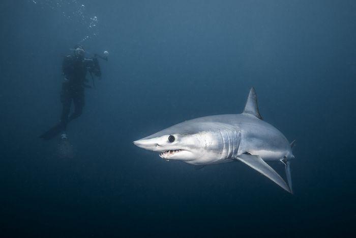 25 histórias de experiências mais assustadoras de mergulhadores 3
