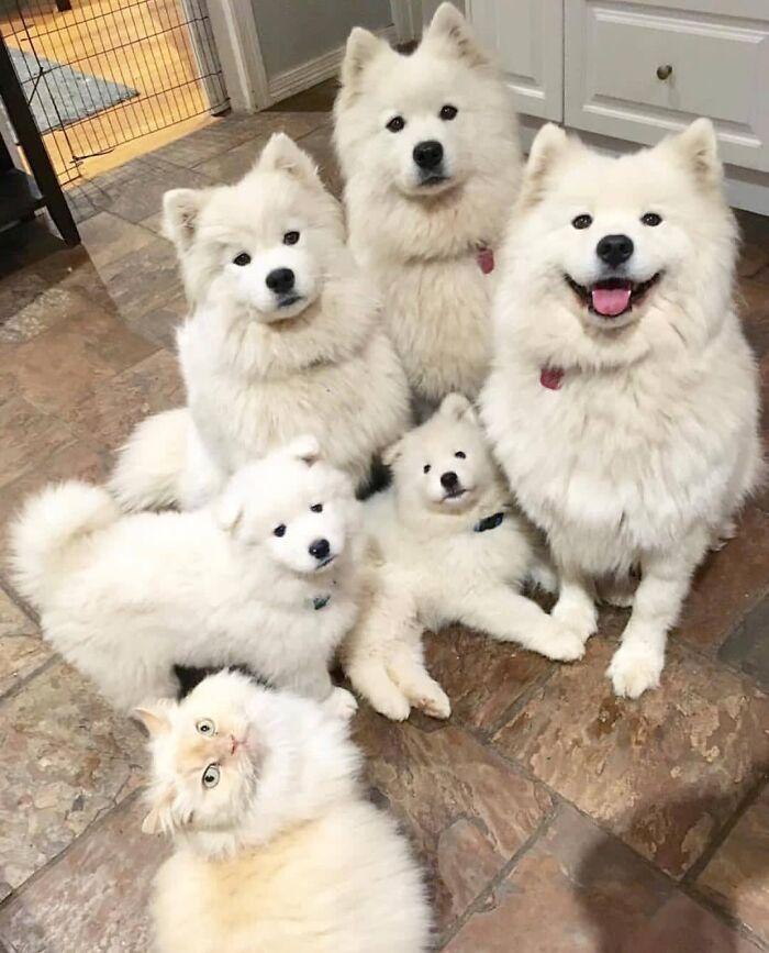 42 adoráveis animais que têm irmãos de outras mães 8