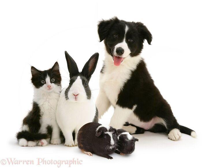 42 adoráveis animais que têm irmãos de outras mães 13