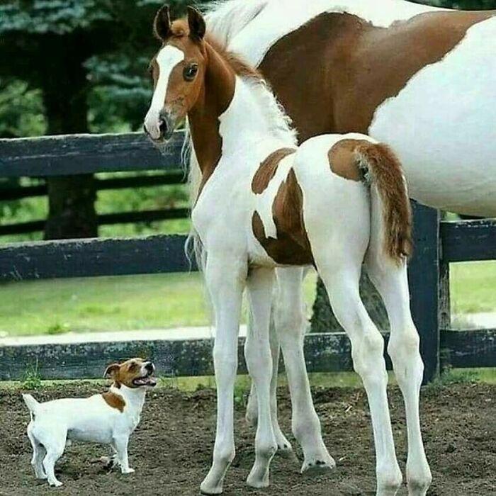 42 adoráveis animais que têm irmãos de outras mães 19