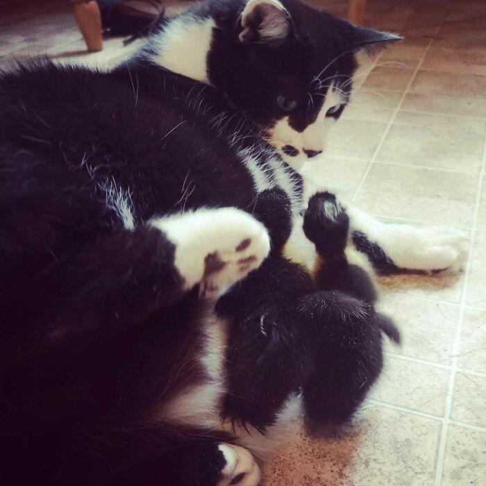 42 adoráveis animais que têm irmãos de outras mães 24