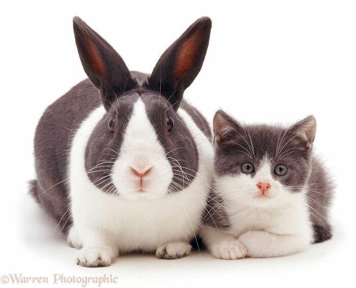 42 adoráveis animais que têm irmãos de outras mães 25