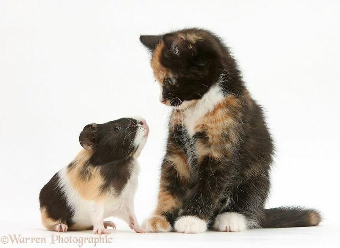 42 adoráveis animais que têm irmãos de outras mães 26