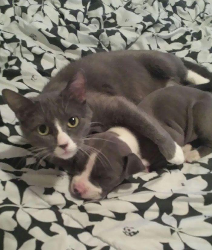 42 adoráveis animais que têm irmãos de outras mães 30