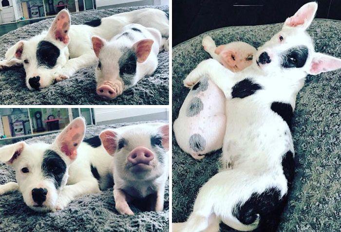 42 adoráveis animais que têm irmãos de outras mães 31