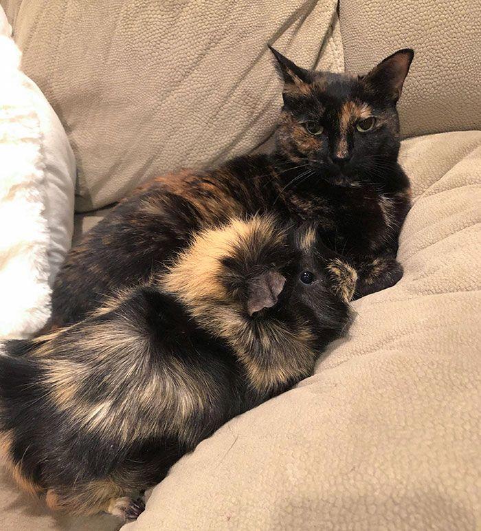 42 adoráveis animais que têm irmãos de outras mães 32