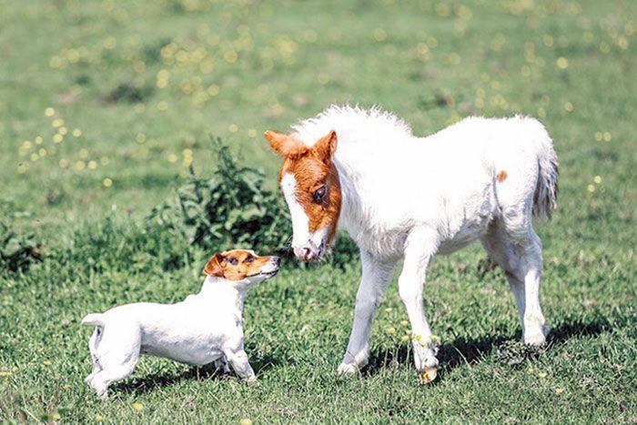 42 adoráveis animais que têm irmãos de outras mães 33