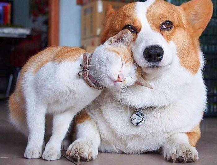 42 adoráveis animais que têm irmãos de outras mães 39