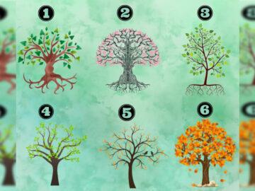 Escolha uma árvore e descubra características da sua personalidade 37