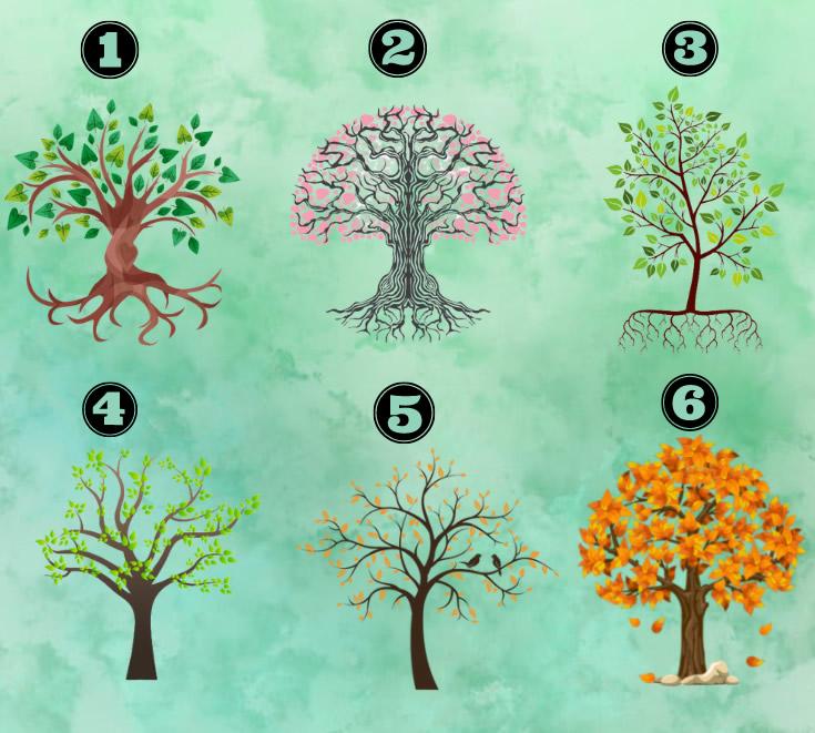 Escolha uma árvore e descubra características da sua personalidade 2