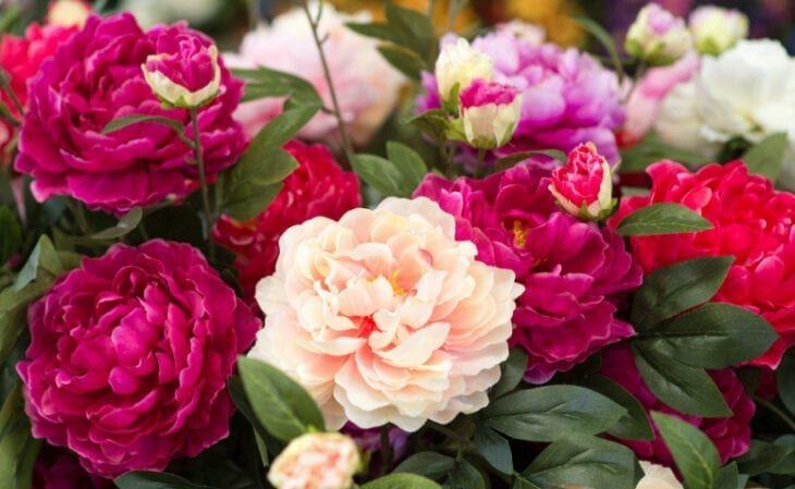 15 flores para melhorar a energia e vibrações da casa 3