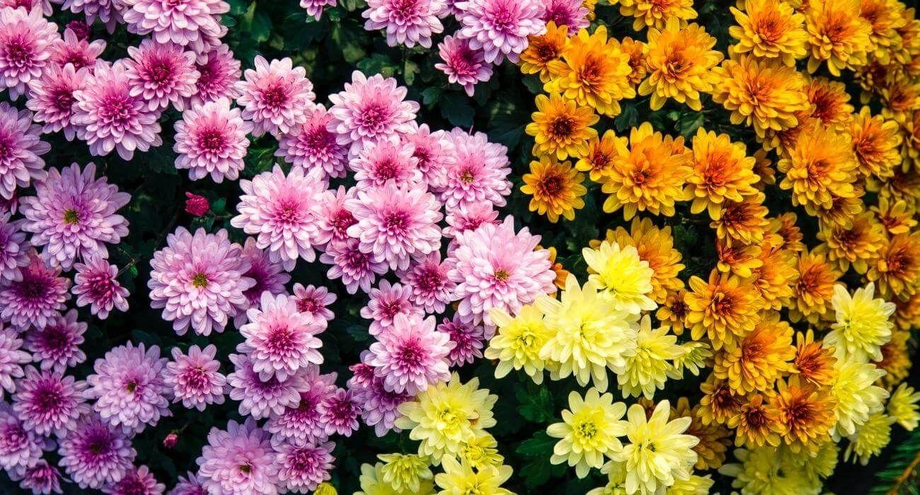 15 flores para melhorar a energia e vibrações da casa 4