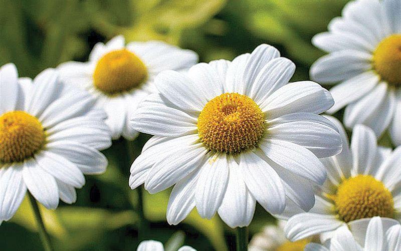 15 flores para melhorar a energia e vibrações da casa 5