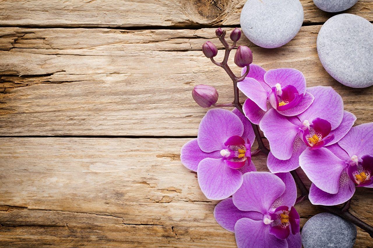 15 flores para melhorar a energia e vibrações da casa 6