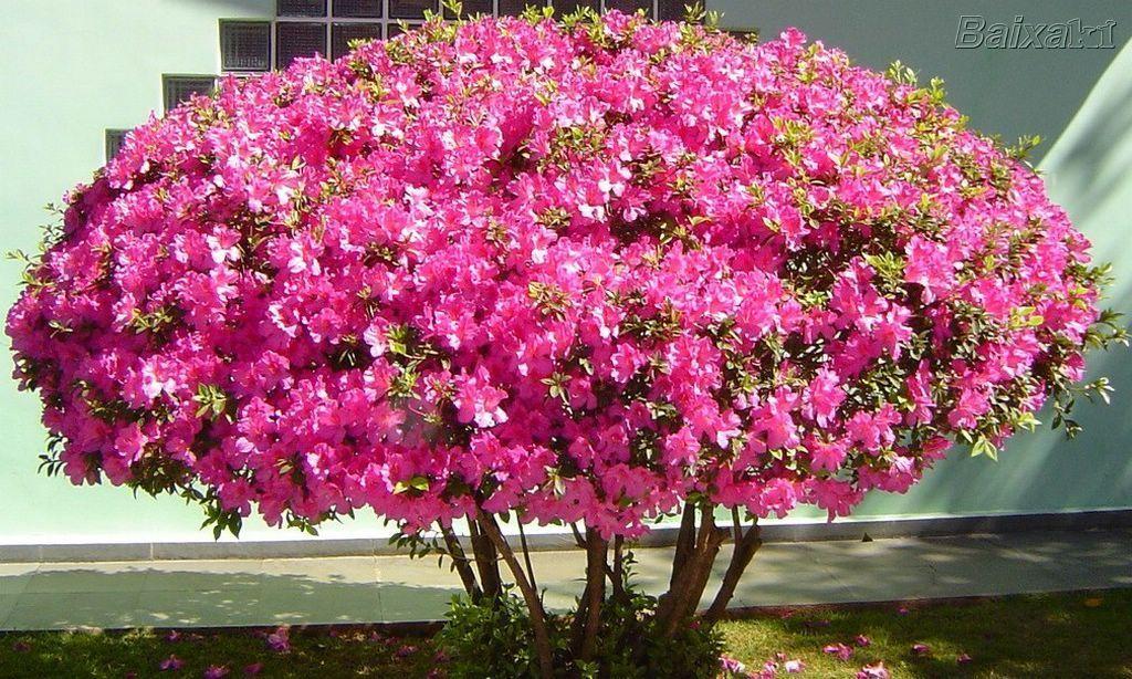15 flores para melhorar a energia e vibrações da casa 7