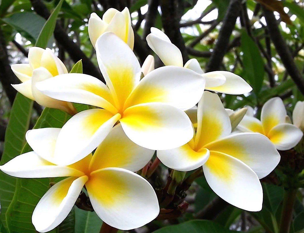 15 flores para melhorar a energia e vibrações da casa 8