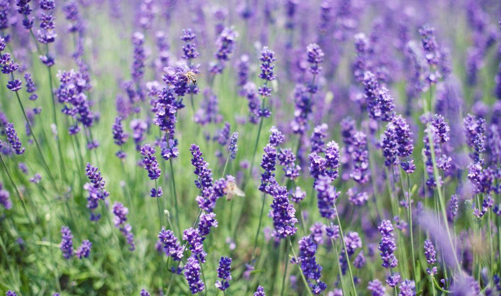 15 flores para melhorar a energia e vibrações da casa 10