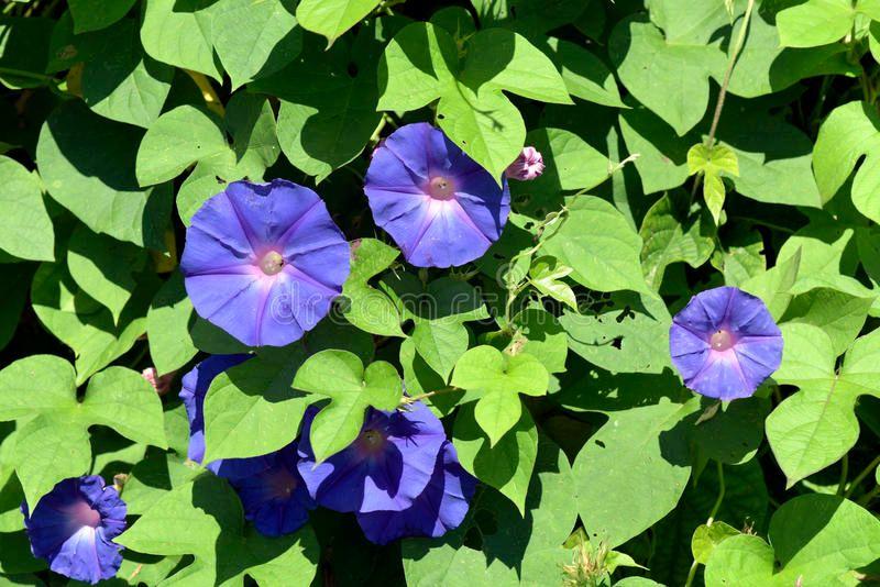 15 flores para melhorar a energia e vibrações da casa 11