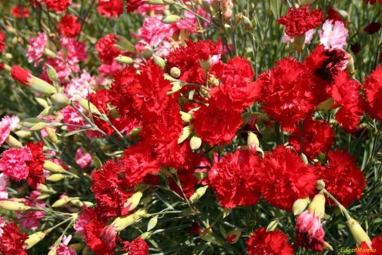 15 flores para melhorar a energia e vibrações da casa 12