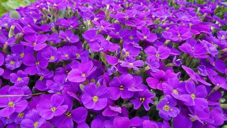 15 flores para melhorar a energia e vibrações da casa 13