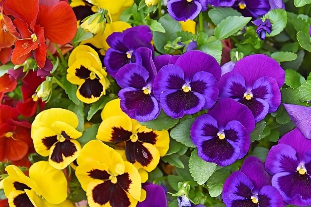 15 flores para melhorar a energia e vibrações da casa 14