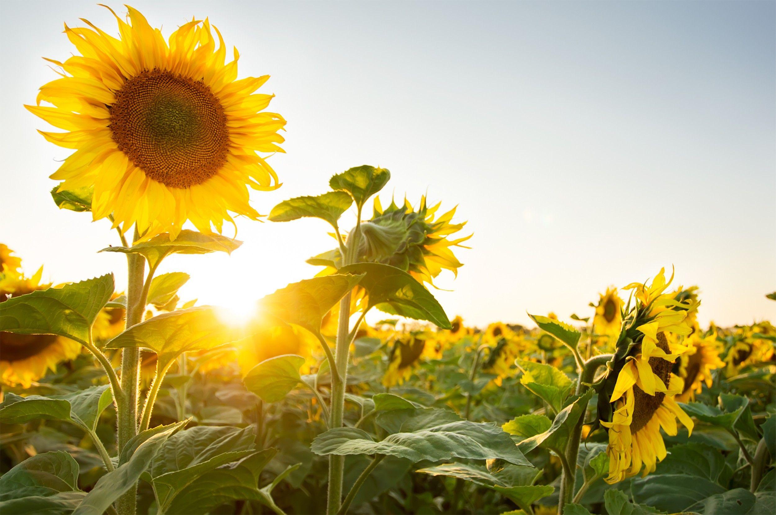 15 flores para melhorar a energia e vibrações da casa 16
