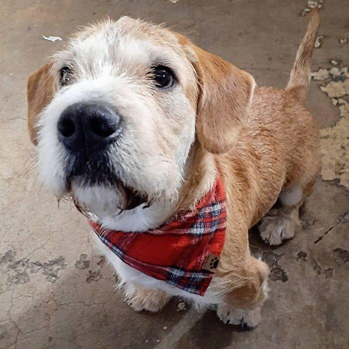 32 fotos de animal de estimação de resgate saudável para curar sua alma edição de setembro 20