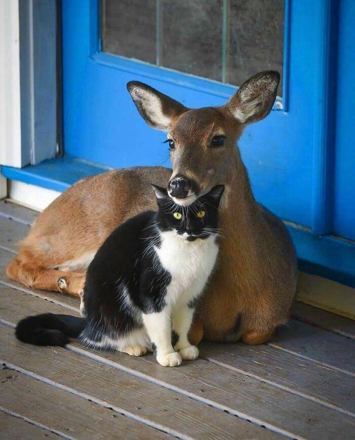 42 fotos de animais que não fazem sentido nenhum 11