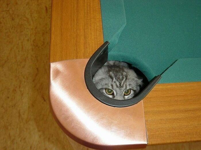 31 gatos aventureiros que se escondem nos lugares mais inusitados! 2