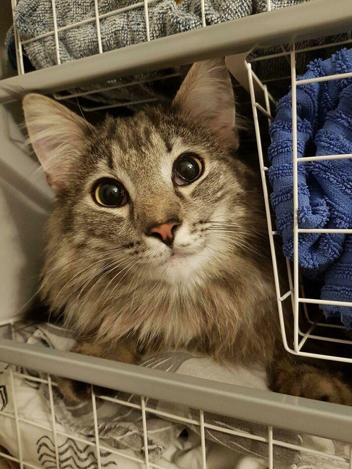 31 gatos aventureiros que se escondem nos lugares mais inusitados! 4