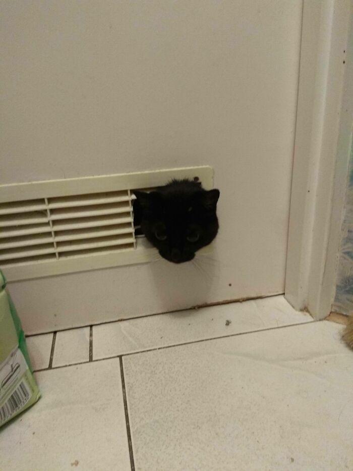 31 gatos aventureiros que se escondem nos lugares mais inusitados! 10