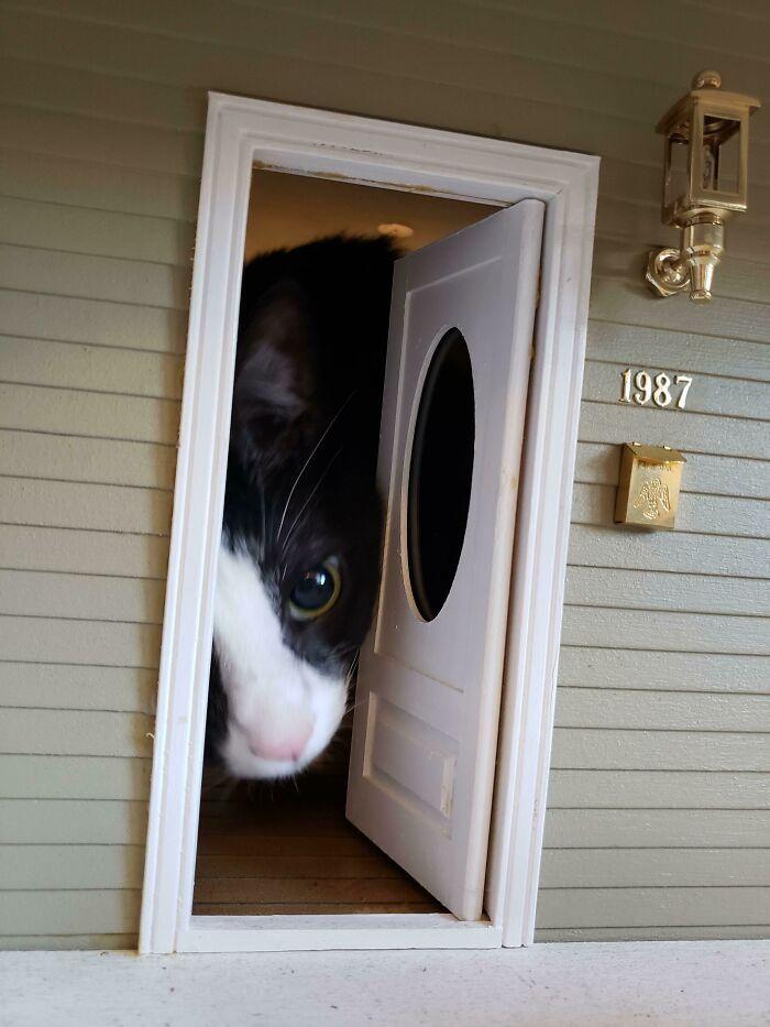 31 gatos aventureiros que se escondem nos lugares mais inusitados! 11