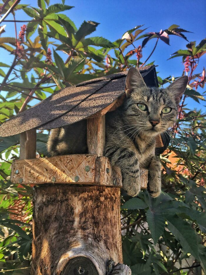 31 gatos aventureiros que se escondem nos lugares mais inusitados! 12