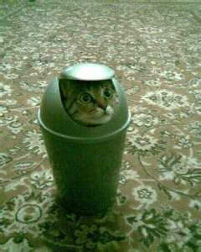 31 gatos aventureiros que se escondem nos lugares mais inusitados! 17