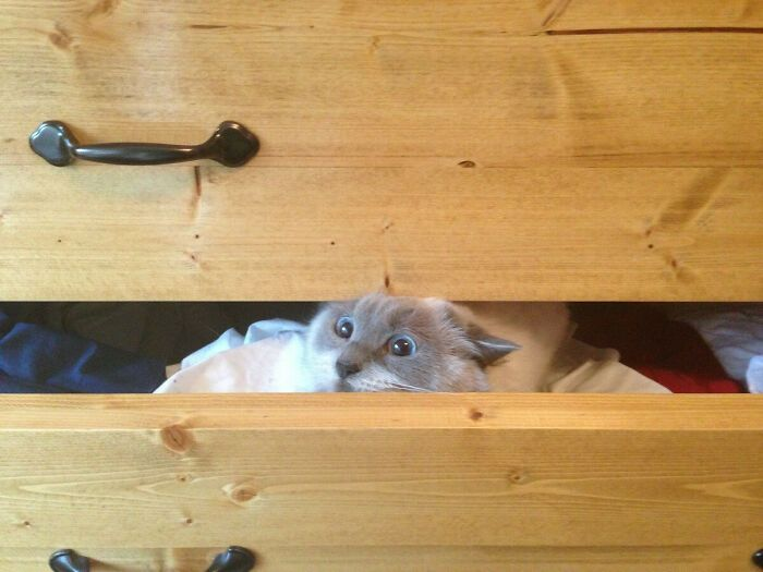 31 gatos aventureiros que se escondem nos lugares mais inusitados! 18