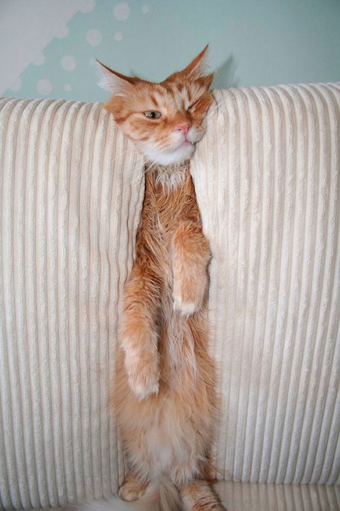 31 gatos aventureiros que se escondem nos lugares mais inusitados! 30