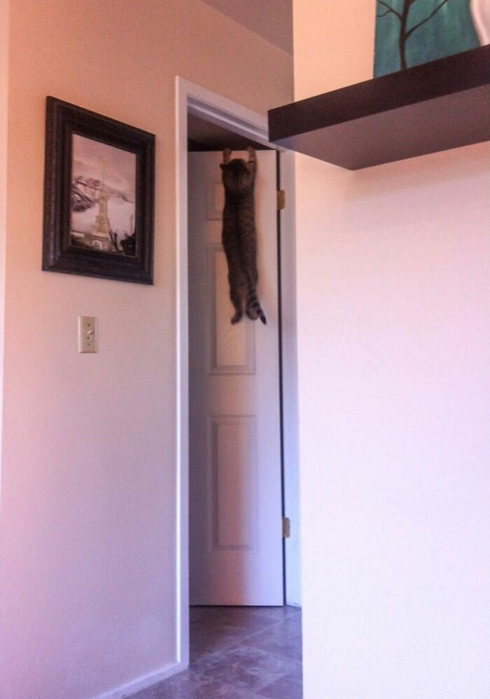 31 gatos aventureiros que se escondem nos lugares mais inusitados! 32