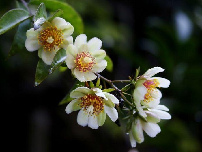 12 plantas medicinais para cultivar em busca da saúde 3