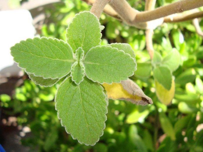 12 plantas medicinais para cultivar em busca da saúde 6
