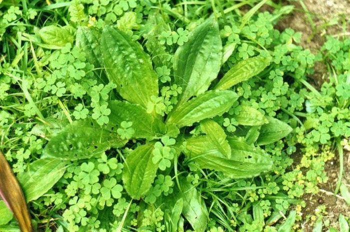 12 plantas medicinais para cultivar em busca da saúde 9