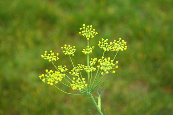 12 plantas medicinais para cultivar em busca da saúde 10