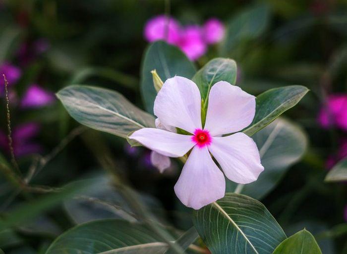 12 plantas medicinais para cultivar em busca da saúde 12